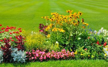 Comment faire un massif de fleurs à Montech?